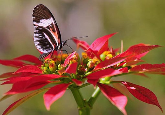 colorful-butterflies-26-photos- (17)