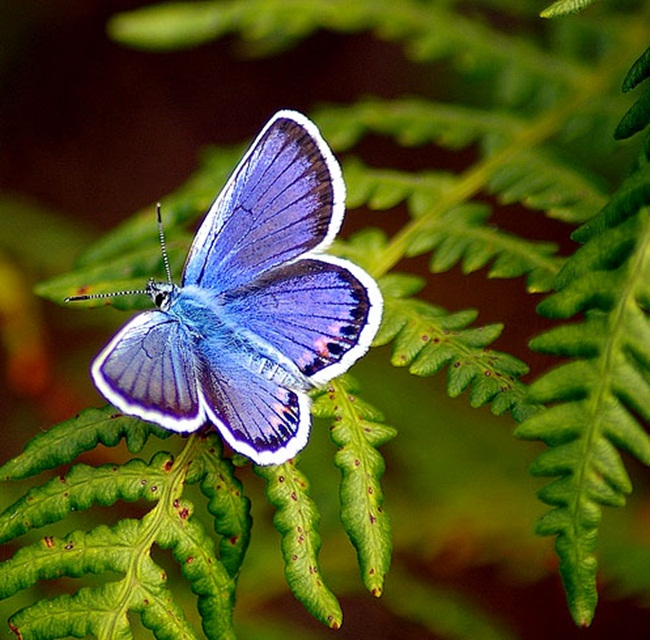 colorful-butterflies-26-photos- (20)