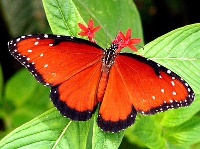 colorful-butterflies-26-photos- (22)
