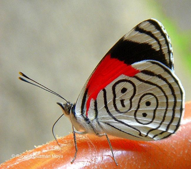 colorful-butterflies-26-photos- (23)