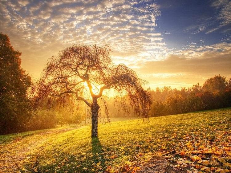 fabulous-nature-scenery-25-photos- (5)