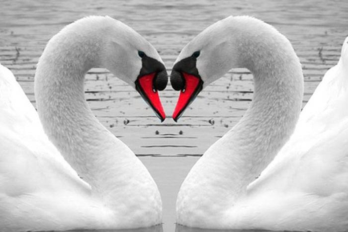 lovely-birds-couple-30-photos- (1)