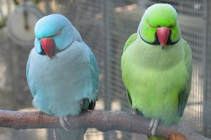 lovely-birds-couple-30-photos- (2)