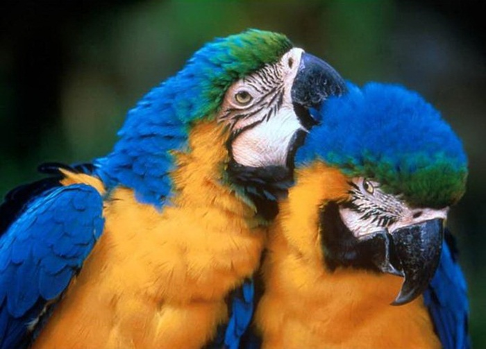 Photos lovely birds couple photos