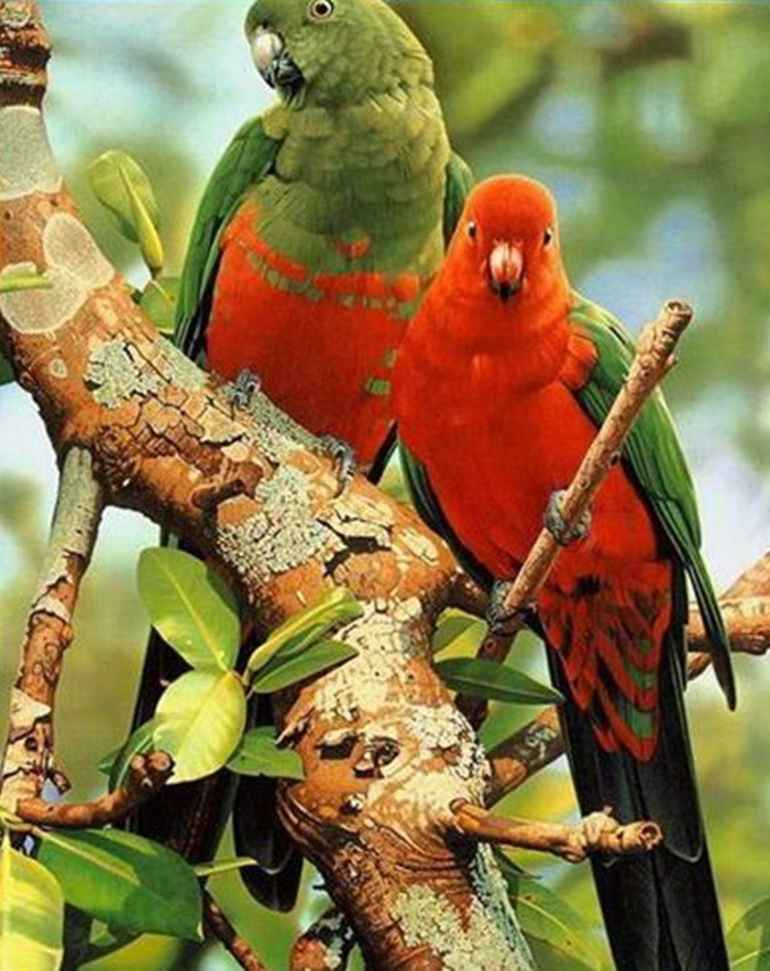 lovely-birds-couple-30-photos- (5)
