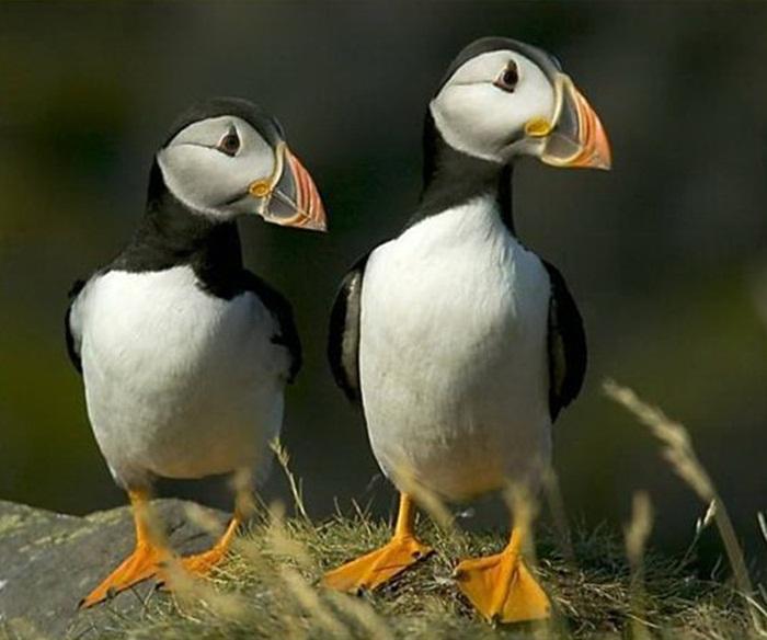 lovely-birds-couple-30-photos- (7)