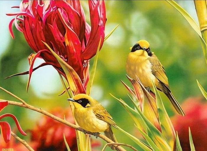 lovely-birds-couple-30-photos- (8)