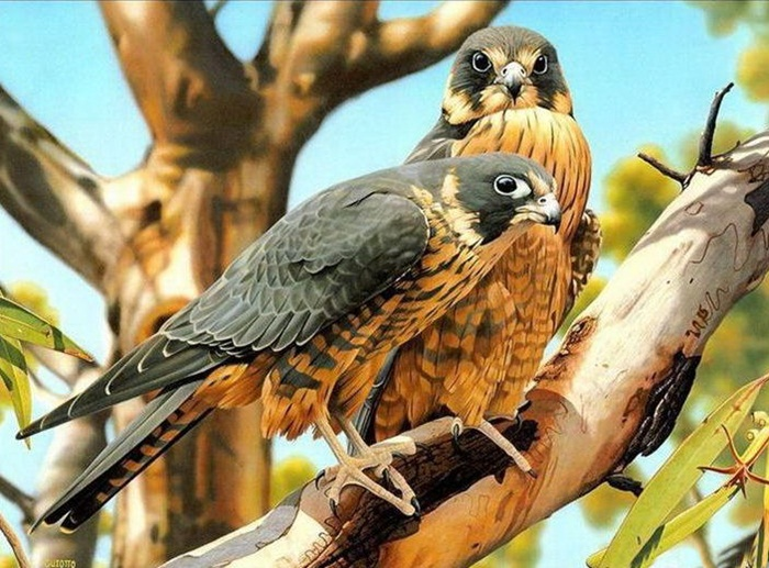 lovely-birds-couple-30-photos- (10)