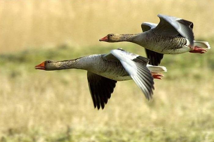 lovely-birds-couple-30-photos- (11)