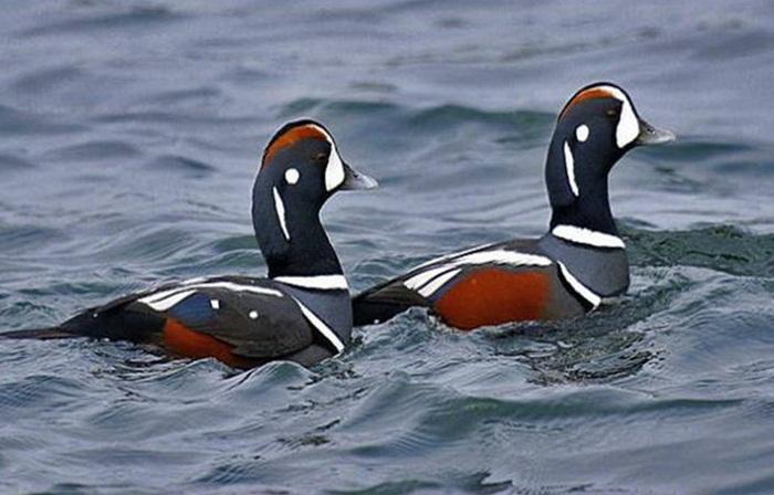 lovely-birds-couple-30-photos- (12)