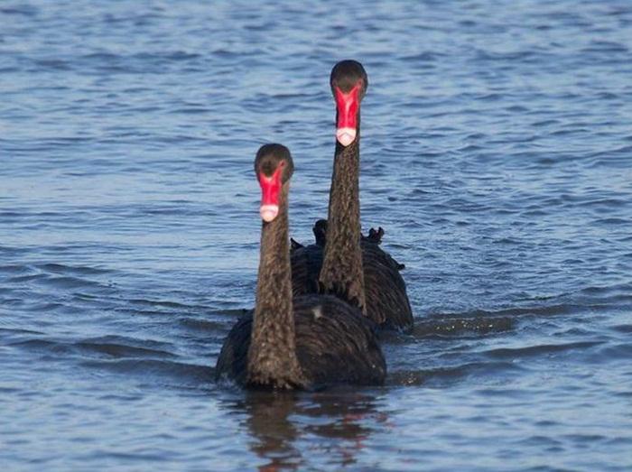 lovely-birds-couple-30-photos- (13)