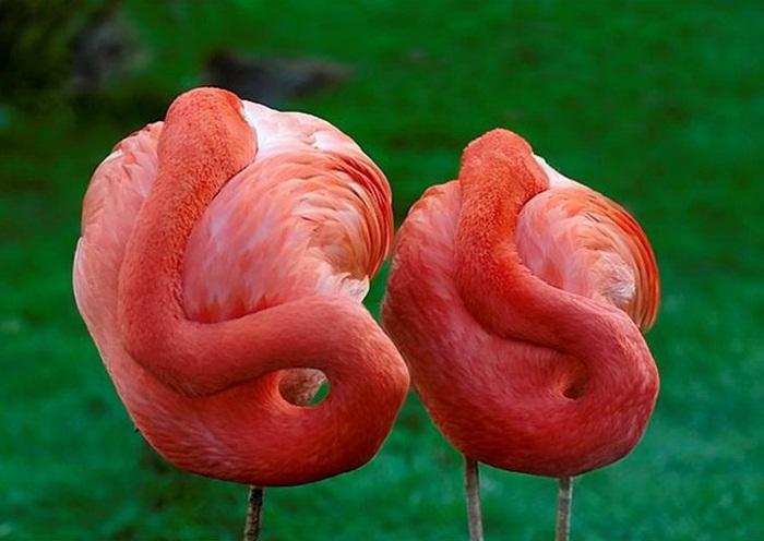 lovely-birds-couple-30-photos- (14)