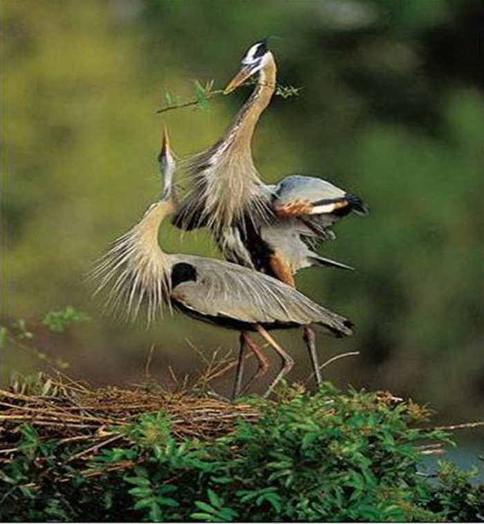 lovely-birds-couple-30-photos- (15)