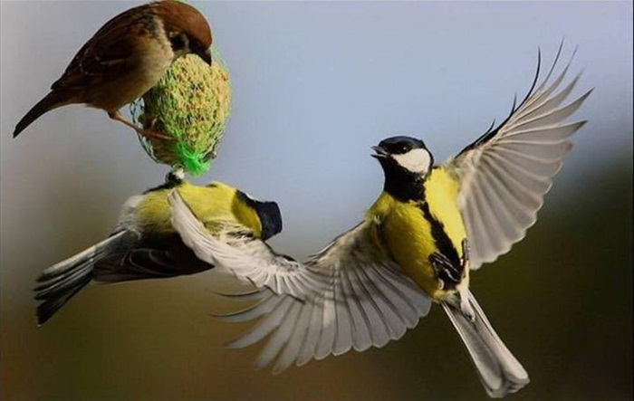lovely-birds-couple-30-photos- (16)