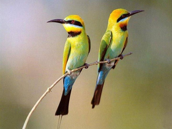 lovely-birds-couple-30-photos- (17)