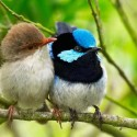 lovely-birds-couple-30-photos- (18)