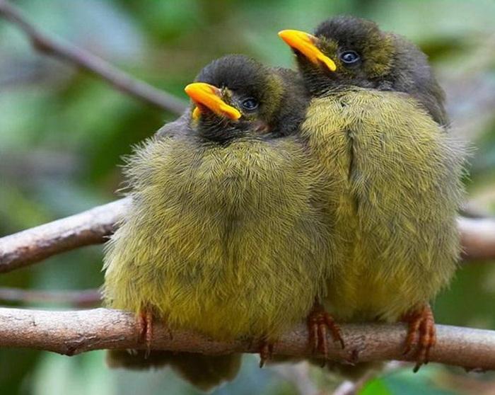 lovely-birds-couple-30-photos- (19)