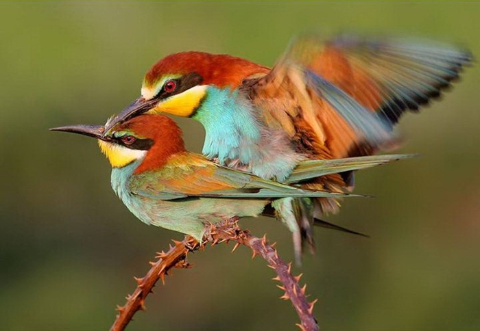 lovely-birds-couple-30-photos- (20)