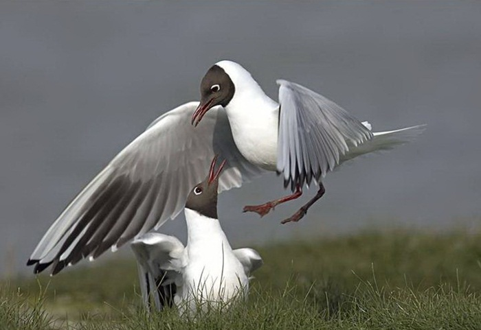 lovely-birds-couple-30-photos- (21)