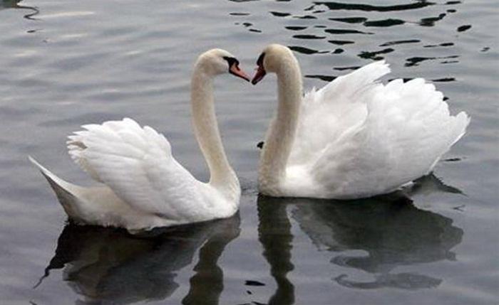 lovely-birds-couple-30-photos- (22)