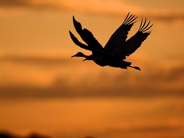 lovely-birds-couple-30-photos- (23)
