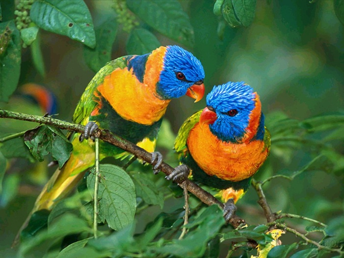lovely-birds-couple-30-photos- (25)