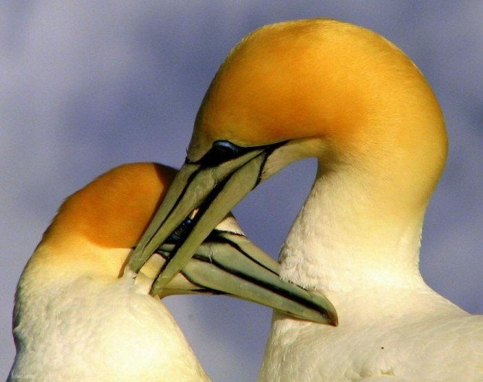 lovely-birds-couple-30-photos- (26)