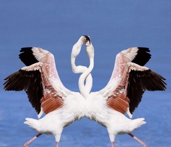 lovely-birds-couple-30-photos- (27)