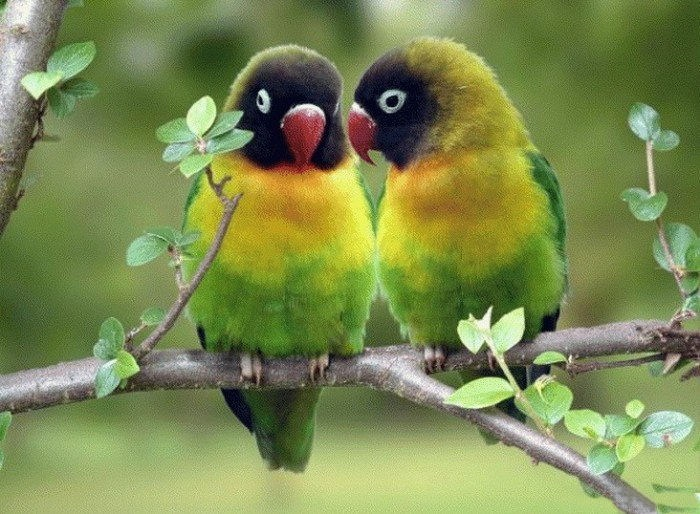 lovely-birds-couple-30-photos- (28)