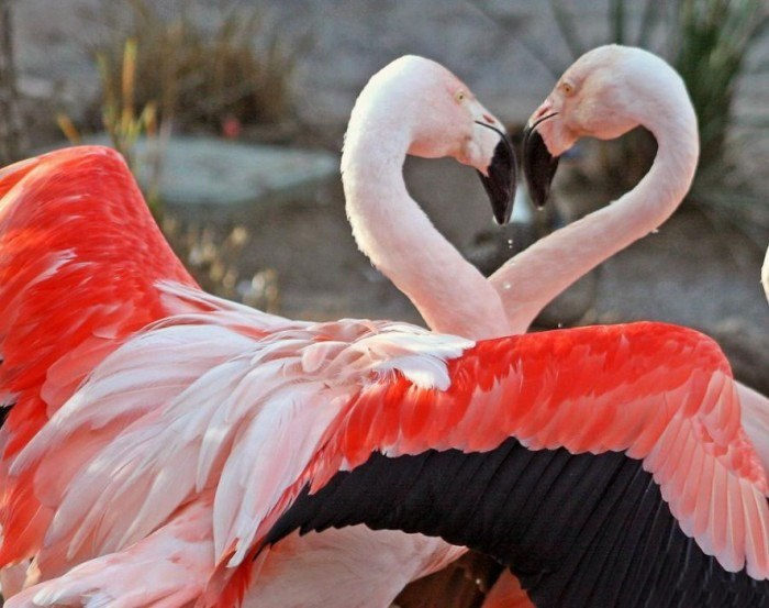 lovely-birds-couple-30-photos- (29)