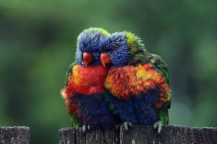 lovely-birds-couple-30-photos- (30)