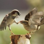 beautiful-birds-in-action- (19)