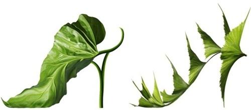 flower-shoe- (3)