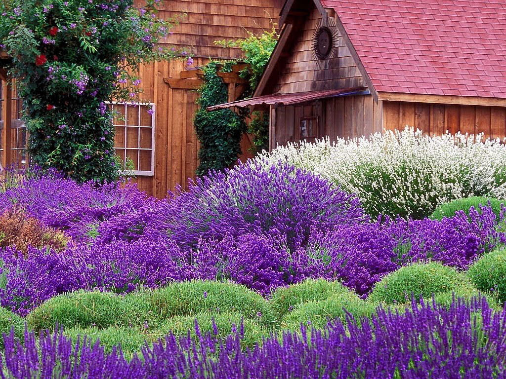 garden-wallpaper-16-photos- (10)