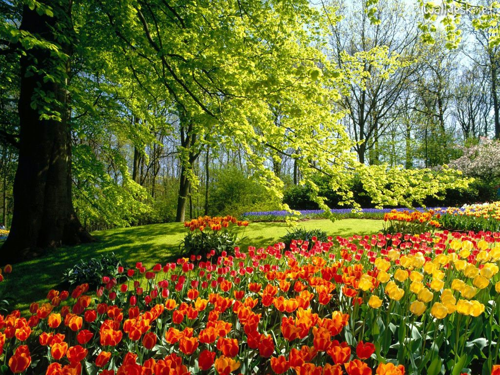 garden-wallpaper-16-photos- (16)