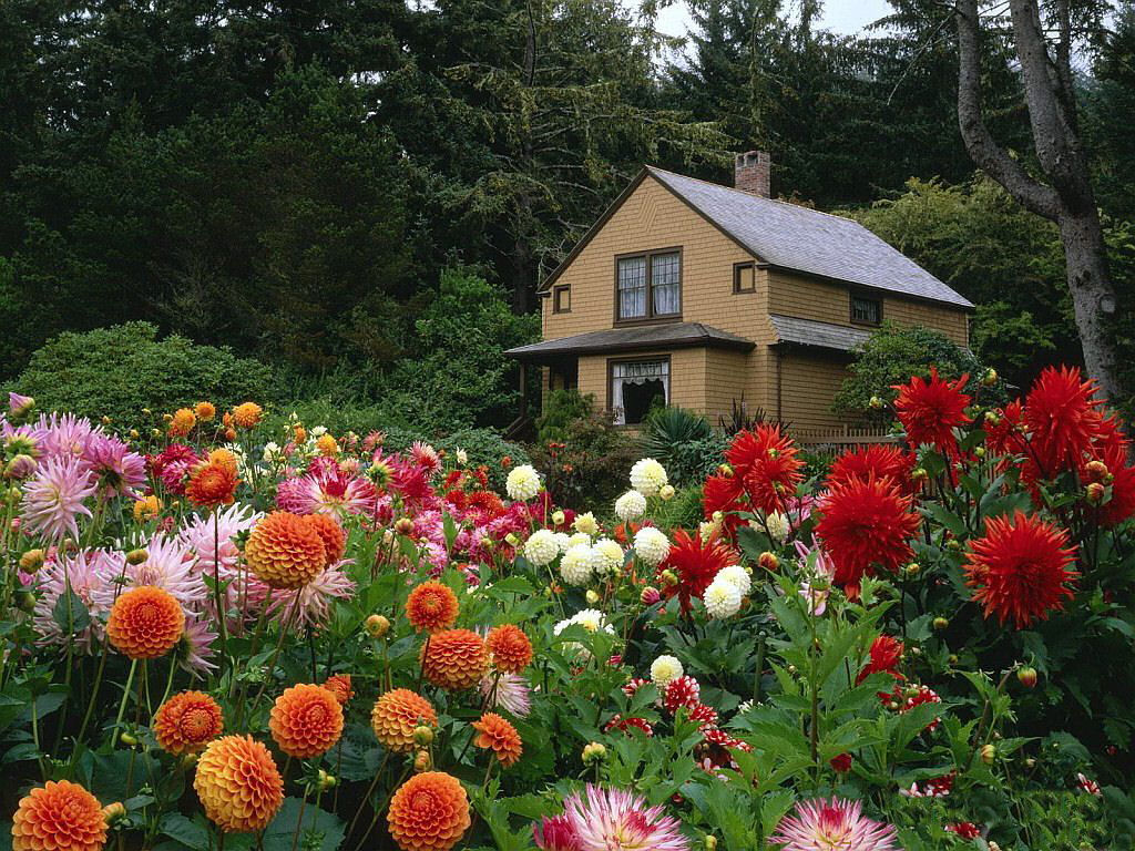 garden wallpaper 16 photos 7 - Beautiful Garden Pictures