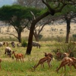 tour-of-kenya- (24)