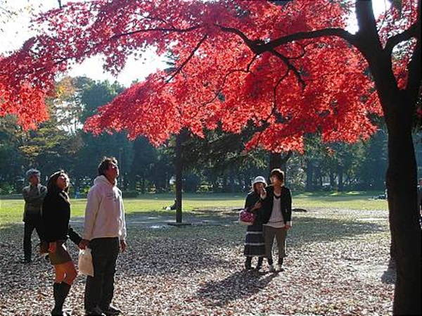 autumn-in-japan- (1)