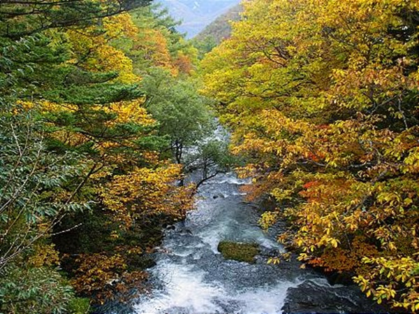 autumn-in-japan- (5)