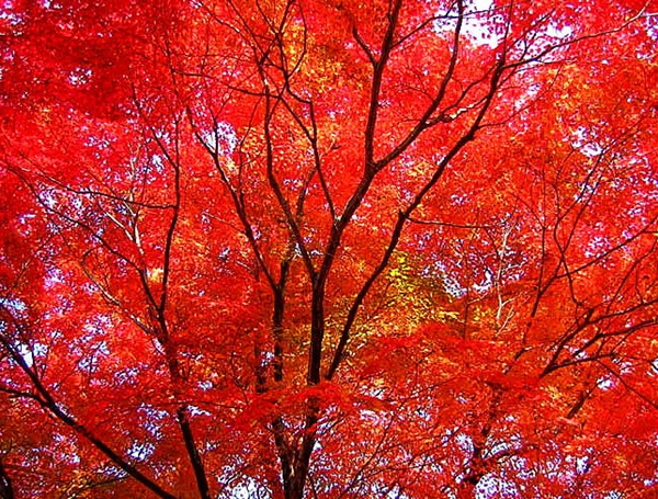 autumn-in-japan- (15)