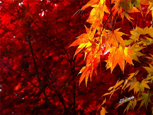 autumn-in-japan- (17)