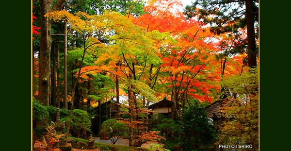 autumn-in-japan- (18)