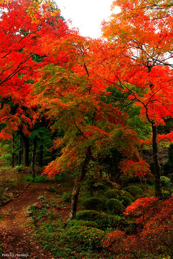autumn-in-japan- (24)