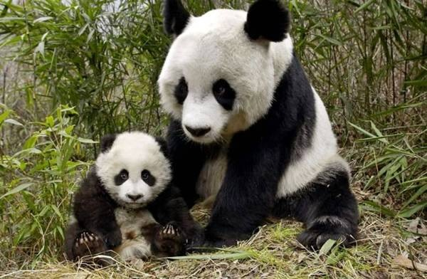 baby-animals-and-mothers- (1)