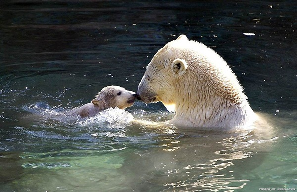 baby-animals-and-mothers- (13)