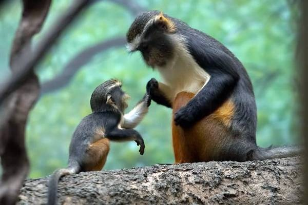 baby-animals-and-mothers- (20)