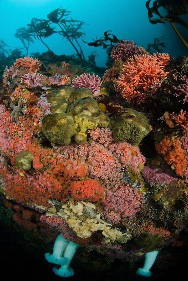 colorful-marine-life-25-photos- (4)