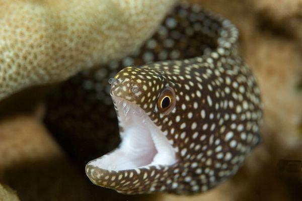 colorful-marine-life-25-photos- (5)