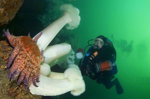 colorful-marine-life-25-photos- (11)