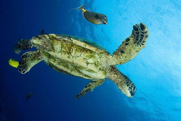 colorful-marine-life-25-photos- (13)
